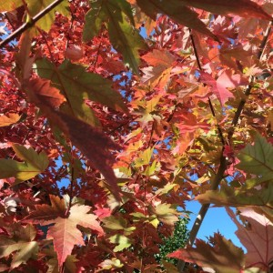 Fall Foliage Medium Square